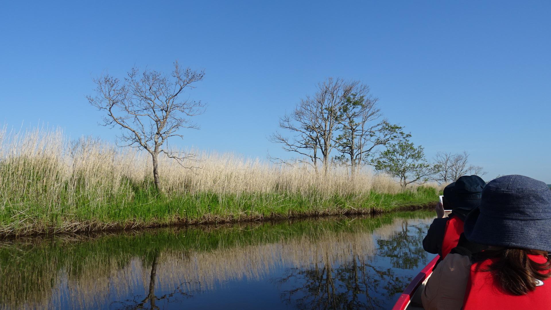 Kushiro Marsh in June