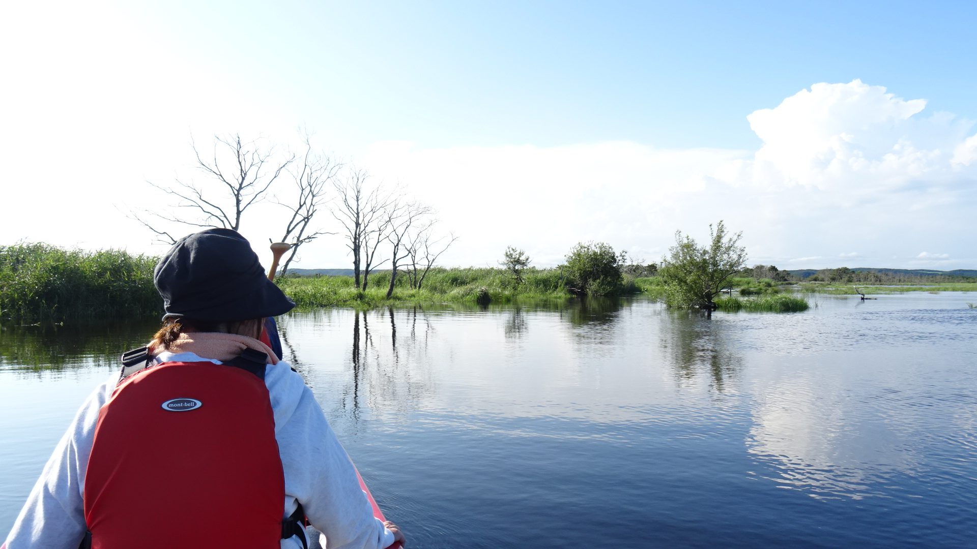 Kushiro Marsh in August